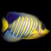 小鱼动态桌面下载